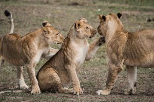 5 curiosidades sobre a Africa