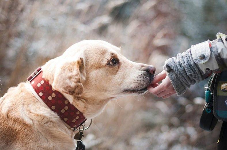 Tipos de ração Quais são os tipos de ração e como saber qual melhor opção para seu cachorro